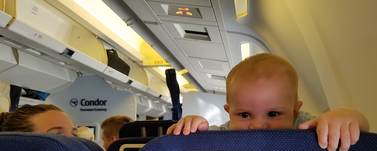 Griffin flying to Frankfurt